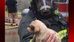 Abbeville house fire puppy saved