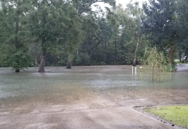 Flooding in Big Woods in Mouton Cove (By Nacie Campbell)