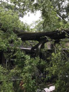 tree-onto-shed-Ville-Platte-Dana-Ardoin