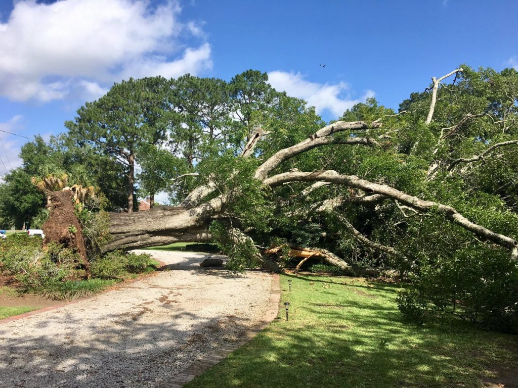 A tree fell on a house in the 1000 block of La Neuville Road (Photo: LPSO)