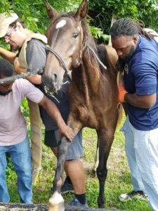 Two horses rescued with just hours to spare on Friday, May 24, 2019. (Photo: Human Society)